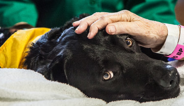 Just one therapy dogs out of almost 14,000 active Pet Partners teams